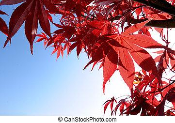 Autumnfall leaves