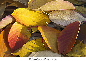 Colorfull autumnleaf yellow, orange and red which has fall down to the lawn