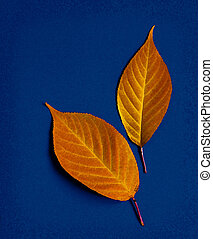 Two leaf on a blue background