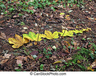 Autum leaves on the ground in the forest