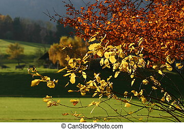 autumn trees in the swiss midlands