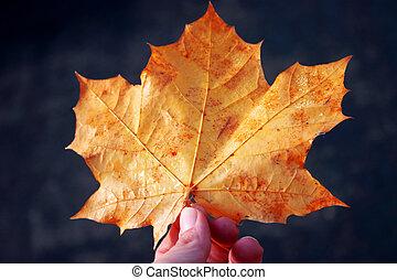 autumn\'s, beleza