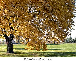 autunno, 2, albero