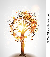 autunno, albero, acero, luce sole
