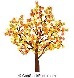 autunno, albero acero