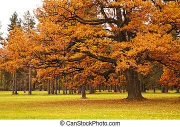 autunno, albero, parco
