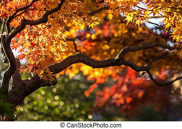 autunno, albero, poco profondo, molto, fuoco