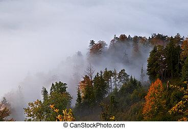 autunno, alpino, foresta, in, nebbia