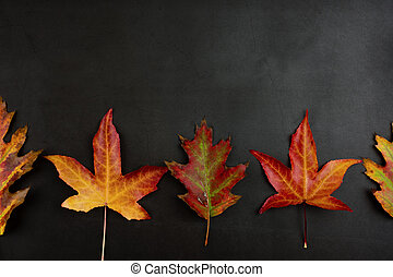 autunno, angolo, colorito, cornice, leaves., contro, alto, fondo., sfondi, cadere, scuro, bordo, o, vista