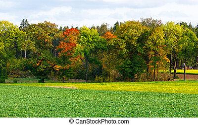 autunno, arancia parte, albero, giallo