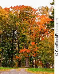 autunno, arancia parte, parco, giallo
