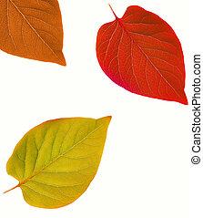 autunno, astratto, foglia, cornice
