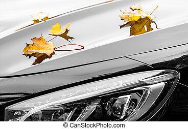 autunno, automobile, foglie, lusso, acero