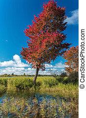 autunno, banca fiume, albero