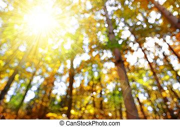 autunno, bokeh, foresta