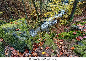autunno, cadere, selvatico, fiume, doubrava, pittoresco, paesaggio.