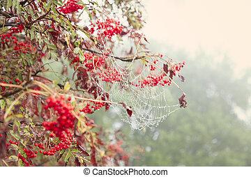 autunno, carta da parati, naturale