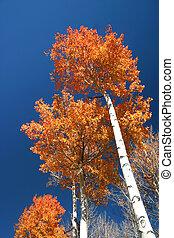autunno, cieli