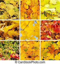 autunno, collezione