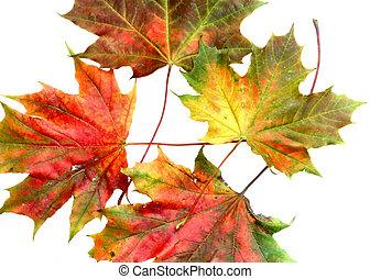 autunno, colori, #10