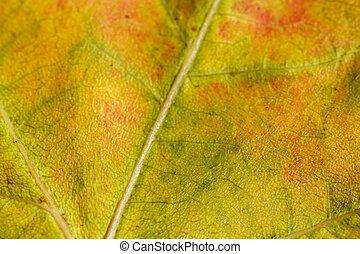 autunno, colori, 2, cadere