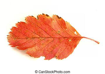 autunno, colori, #4