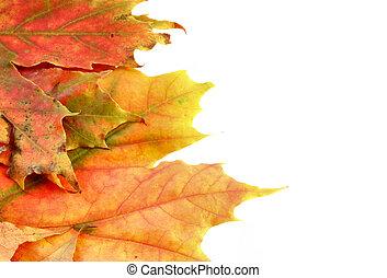 autunno, colori, #7