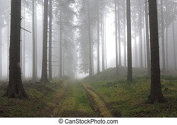autunno, conifero, foresta, in, il, mattina, foschia
