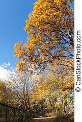 autunno, corsia, parco