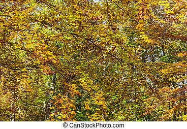 autunno, dettaglio, giallo, foresta