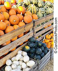 autunno, differente, generi, fattoria, forme, zucche