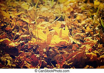 autunno, fondo