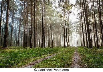 autunno,  foothpath, foresta, alba, nebbioso