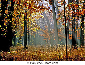 autunno, foresta