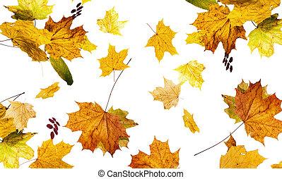 autunno, giù, foglie, caduto