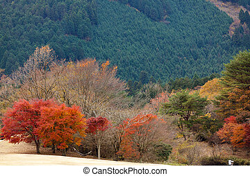 autunno, giapponese, paesaggio