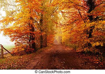 autunno, in, il, foresta