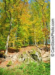 autunno, in, il, foresta, con, colorito, foglie