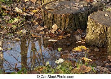 autunno, in, legno