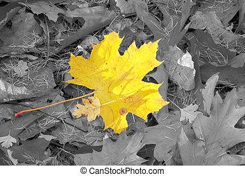 autunno, individualità