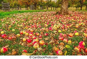 autunno, mela, giardino