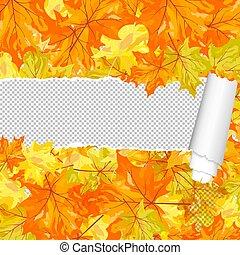 autunno, modello, strappato, striscia, acero