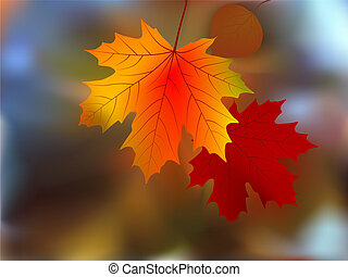autunno, molto, foglie, poco profondo, fuoco.