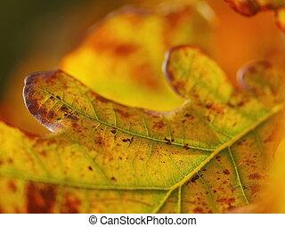 autunno, molto, fuoco poco profondo, foglie