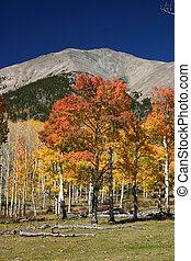 autunno, montagna, scena