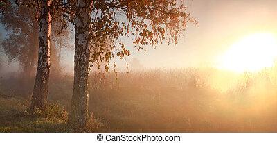 autunno, nebbioso, foresta, alba