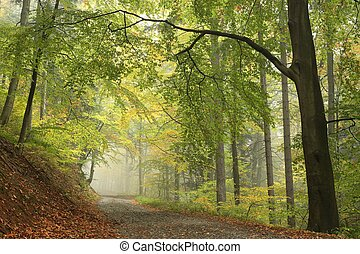 autunno, nebbioso, foresta