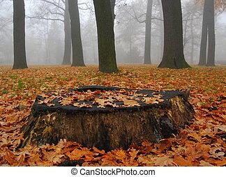 autunno, nebbioso, parco, tronco