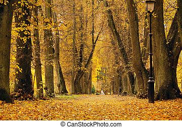 autunno, ottobre, colorito, park., fogliame, albero, vicolo
