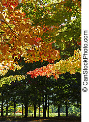 autunno, parco, albero, cadere